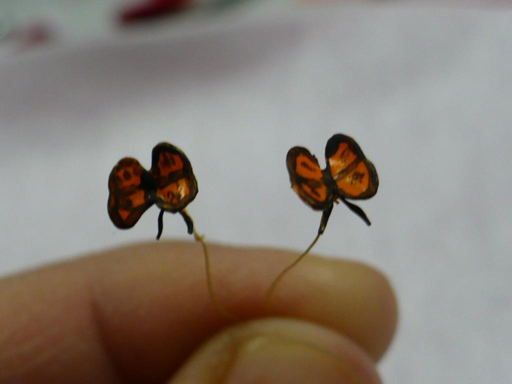 My third and fourth butterflys..