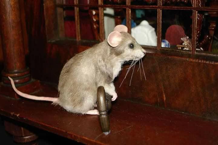 Connie Sauve stolen mouse.jpg