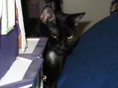 """Severus """"T"""" Cat"""